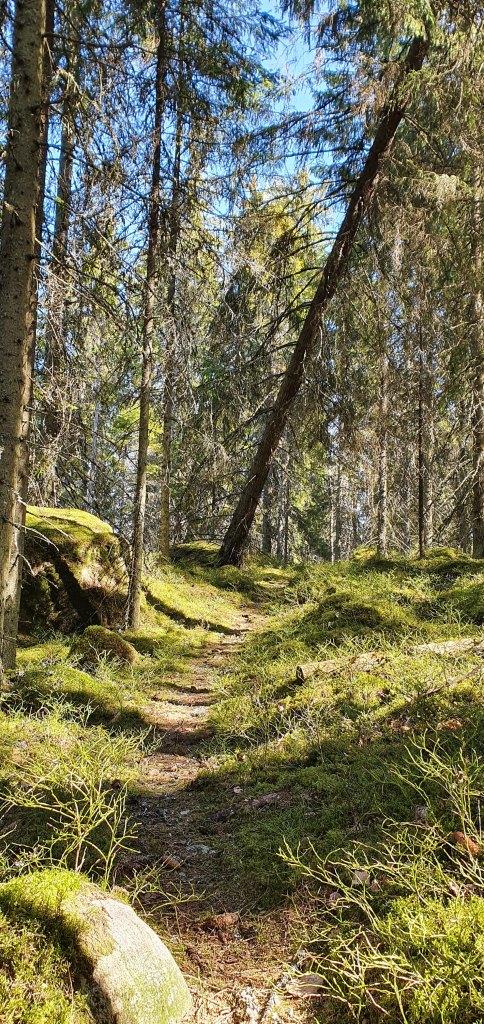 Fjällbacka metsä Siuntio Finland